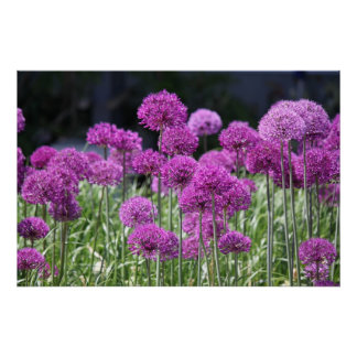Spring Forest Flowers of Garlic Poster