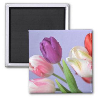 Spring Tulips Magnet