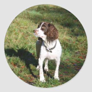 Springer Spaniel Dog  Stickers