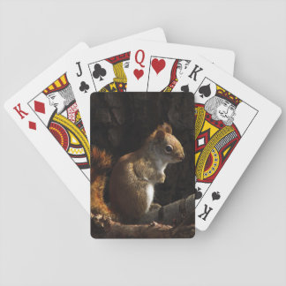 Squirrel in Patch of Sunlight Playing Cards