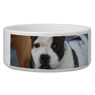 Staffordshire bull terrier pet bowls