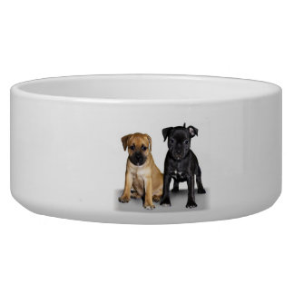 Staffordshire bull terrier puppies dog water bowl