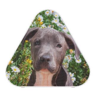 Staffordshire Bull Terrier puppy portrait