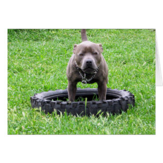 Staffy,_In Car Tyre,-Small_Greeting_Card Note Card