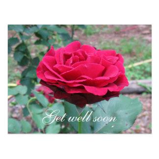 Stairway To Heaven Rose Postcard
