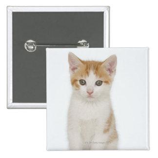 Studio shot of kitten 15 cm square badge