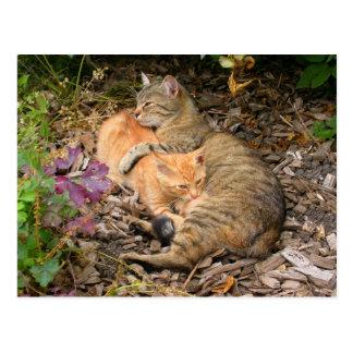 Suckling Ginger Big Baby Cat Postcard