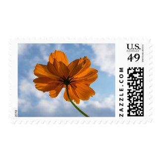 Sulphur Cosmos Orange Flower Postage Stamps