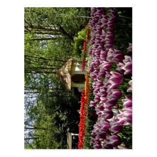 Summary Description Keukenhof Tulip Gardens in Lis Postcard
