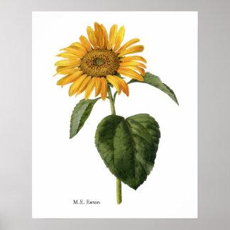 Sunflower Botanical Poster