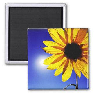 Sunflower in the Sun Magnet