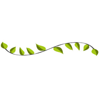 NATURE leaves trees landscapes