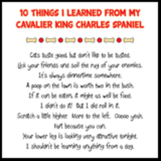 Things I Learned From Cavalier King Charles Joke