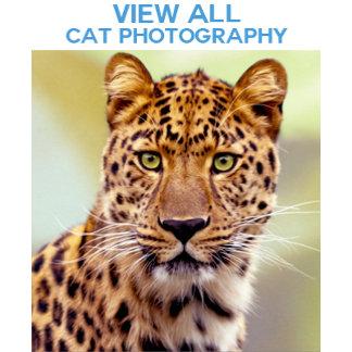 *Cat Photographs