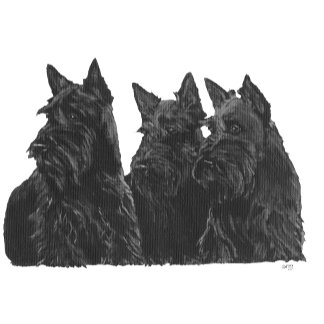 3 Sitting Scotties