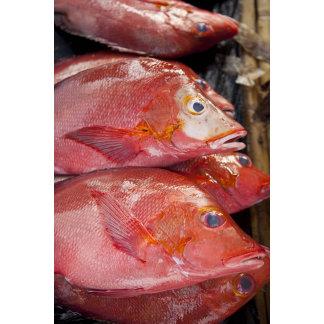 Fish at market, town of Kalabahi, Alor Island,