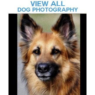*Dog Photographs