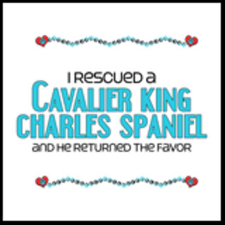 I Rescued a Cavalier King Charles Spaniel (Male)