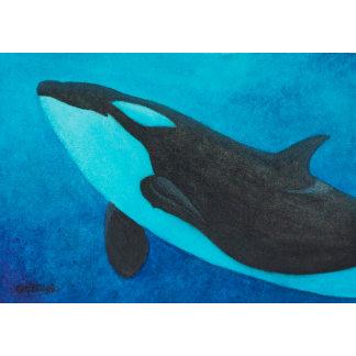Arise - Killer Whale/Orca