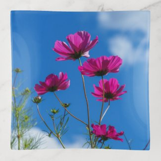 Tall Pink Cosmos Flowers Trinket Tray