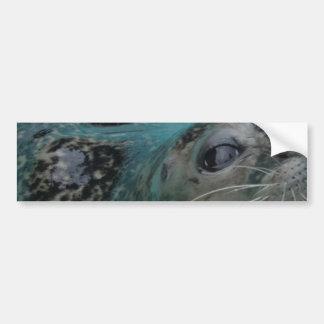 Sweet Seal Bumper Sticker