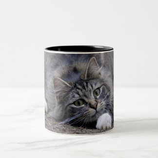 Tabby Cat on Alert Ready to Pounce Two-Tone Mug