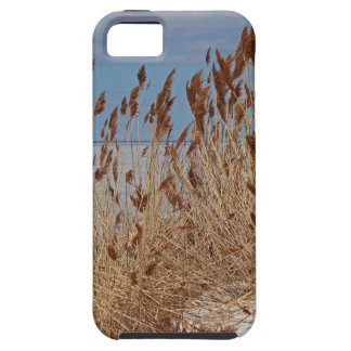 Tame a Wild Wind II Case For The iPhone 5