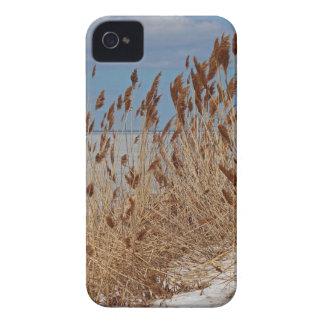 Tame a Wild Wind II iPhone 4 Case