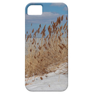 Tame a Wild Wind II iPhone 5 Cases