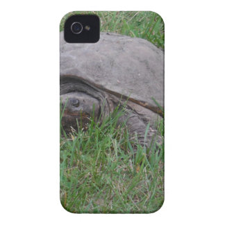 Tame Snapper Turtle iPhone 4 Case-Mate Cases