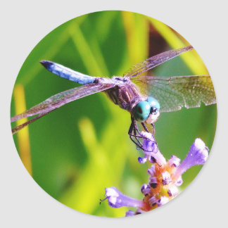 Teal & purple Dragonfly Round Sticker