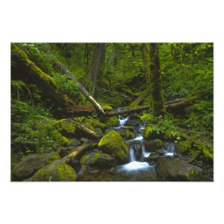 Temperate Rainforest Stream in Columbia River Photograph
