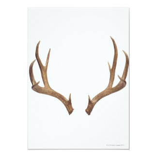 Ten Point Deer 13 Cm X 18 Cm Invitation Card