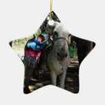 Tequila Donkey Ceramic Star Decoration