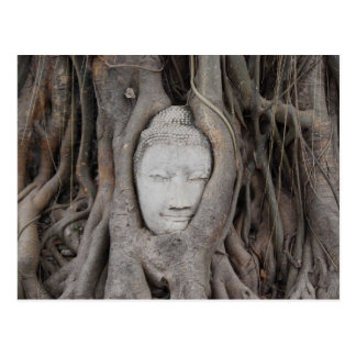 Thailand Head of Buddha surrounded by trees Postcard