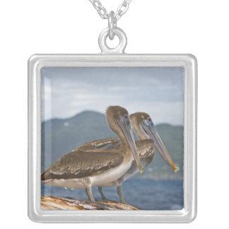 The Brown Pelican ( Pelecanus Occidentalis ) Square Pendant Necklace