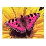 The Butterfly is a Flying Flower Postcard