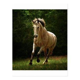 The Gallop Postcard