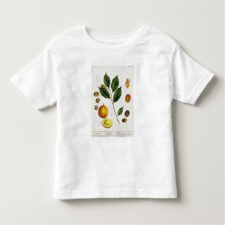 The Nutmeg, plate 353 from 'A Curious Herbal', pub T Shirts