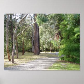 The Woods of Dunedin's Botanical Gardens Poster
