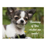 Thinking Of You Chihuahua Postcard
