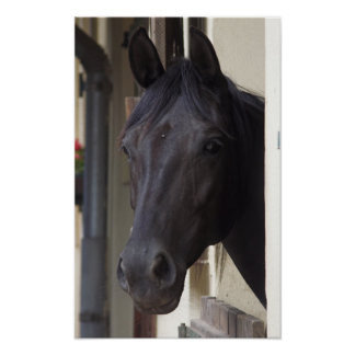 Thoroughbred Friesian Horse Poster