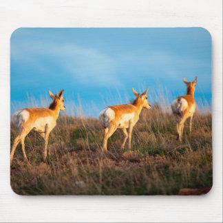 Three antelope walking away at sunset mouse pad