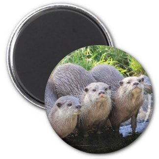 Three Cute Otters Wildlife Photography 6 Cm Round Magnet