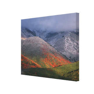 Three seasons of foliage, red maples and fall stretched canvas print