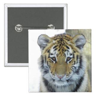 Tiger Cub In Snow Close Up Portrait 15 Cm Square Badge