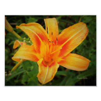 Tiger Lily in Botanical Garden Value Poster