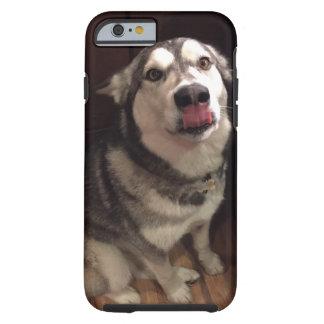 Tongue Teasing Alaskan Malamute Photograph Tough iPhone 6 Case
