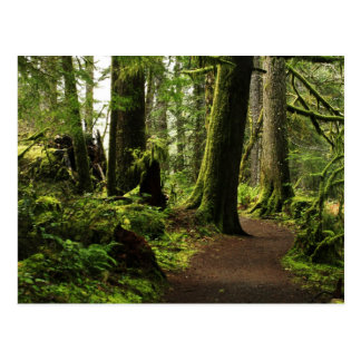 Trail Amongst Giants Postcard
