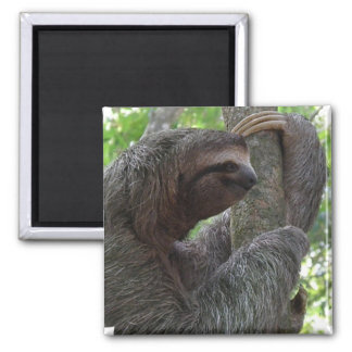 Tree Climbing Sloth Square Magnet